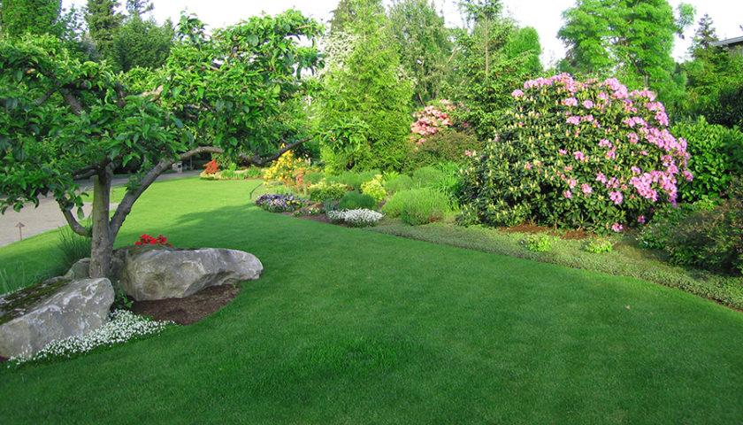 Slå græsset jævnligt med den rette plæneklipper