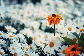 Skab liv i hjemmet med planter og blomster