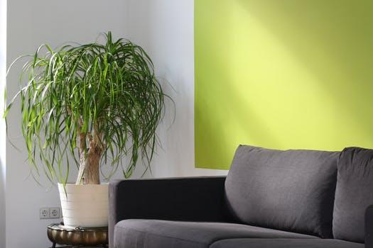Træk naturen ind i din stue med et lammeskind
