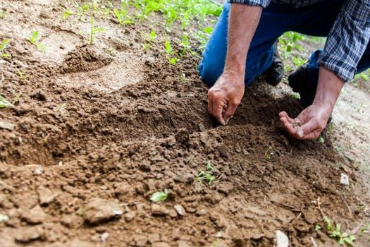 Har du brug for hjælp til at ordne haven?