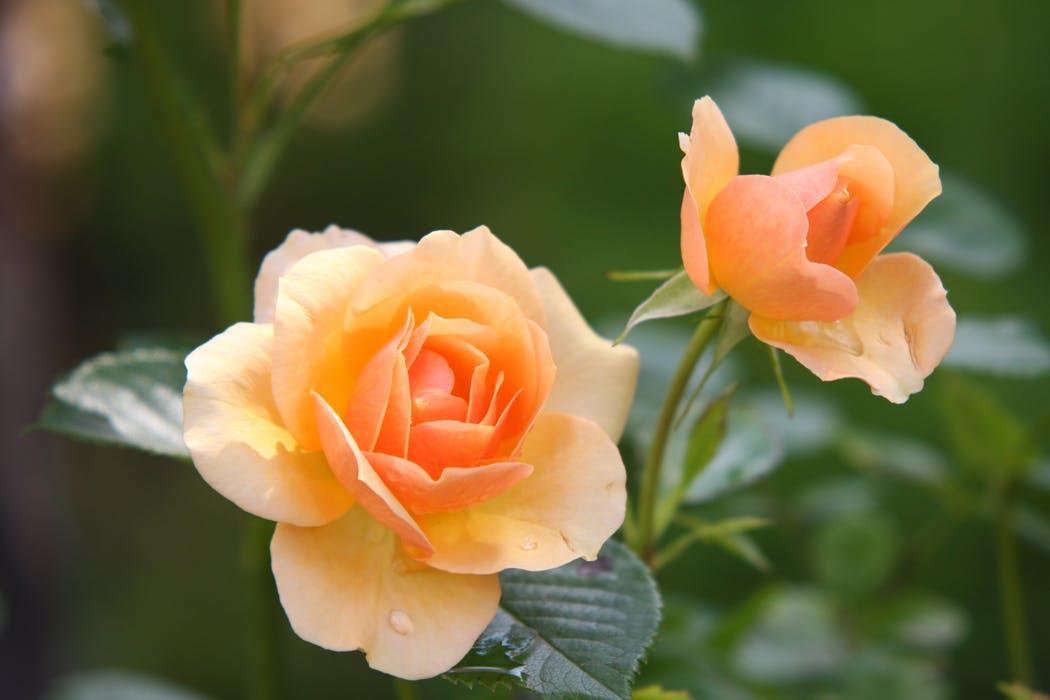 Smukke blomster i høj kvalitet leveres på Frederiksberg