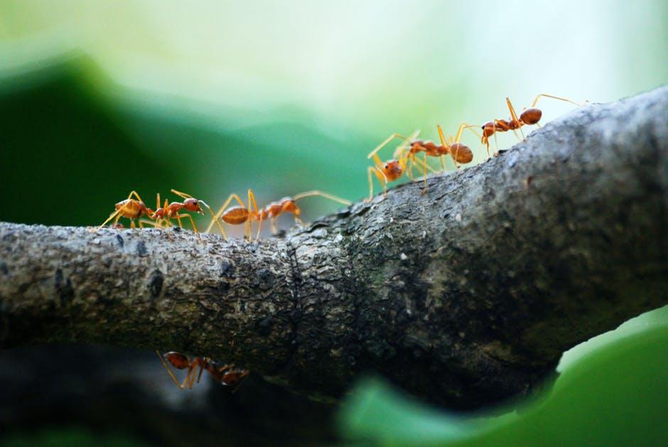 Myreangreb – nyttig viden til bekæmpelse
