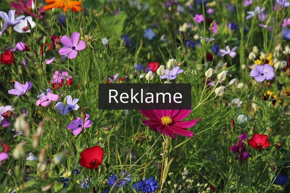Forny din have med smukke planter