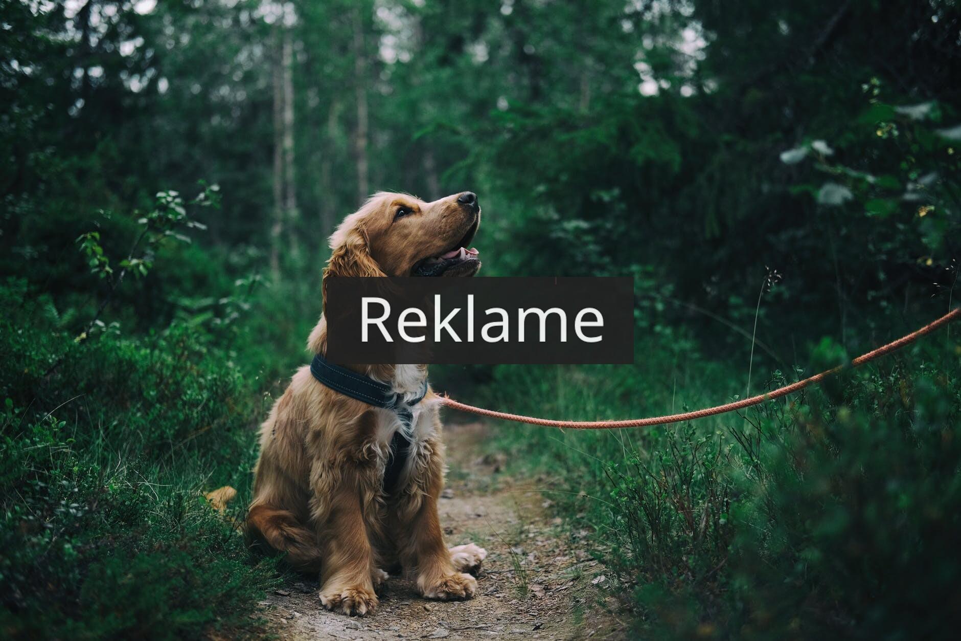 Når du skal have et halsbånd til din hund