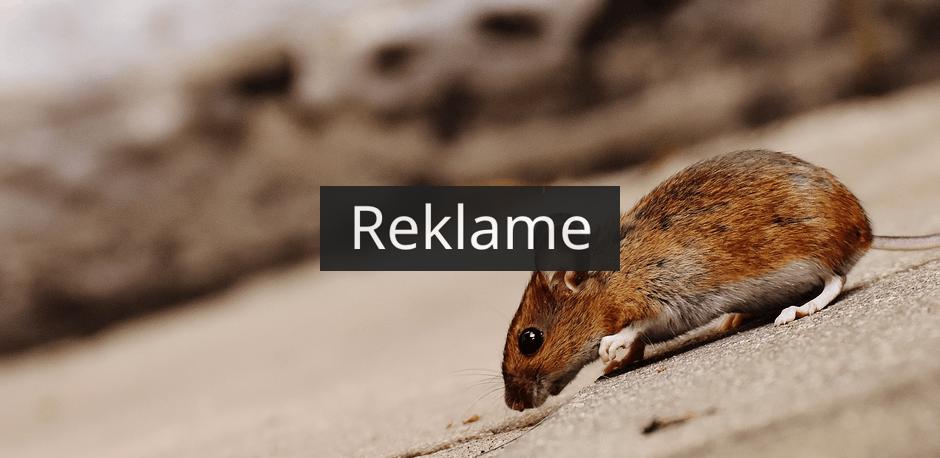 Hvis du har problemer med rotter