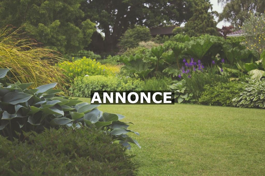 Vil du også have en smukkere have